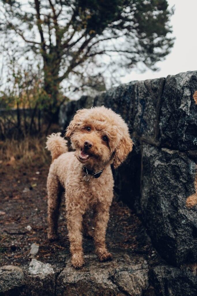 cute tan dog